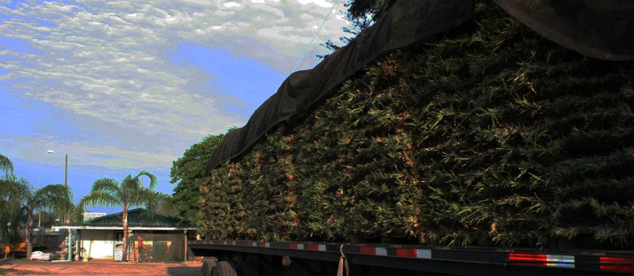 With fresh sod delivered daily….