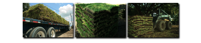 A 1 Sod lutz land o lakes sod pricing