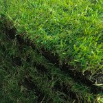 A 1 Sod lutz land o lakes green zoysia sod