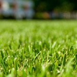 A 1 Sod lutz land o lakes new lawn green lawn
