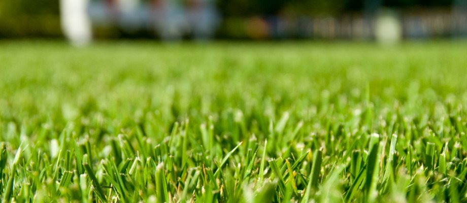 With the greenest lawn around.