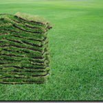 A 1 Sod lutz land o lakes shade tolerant st augustine sod